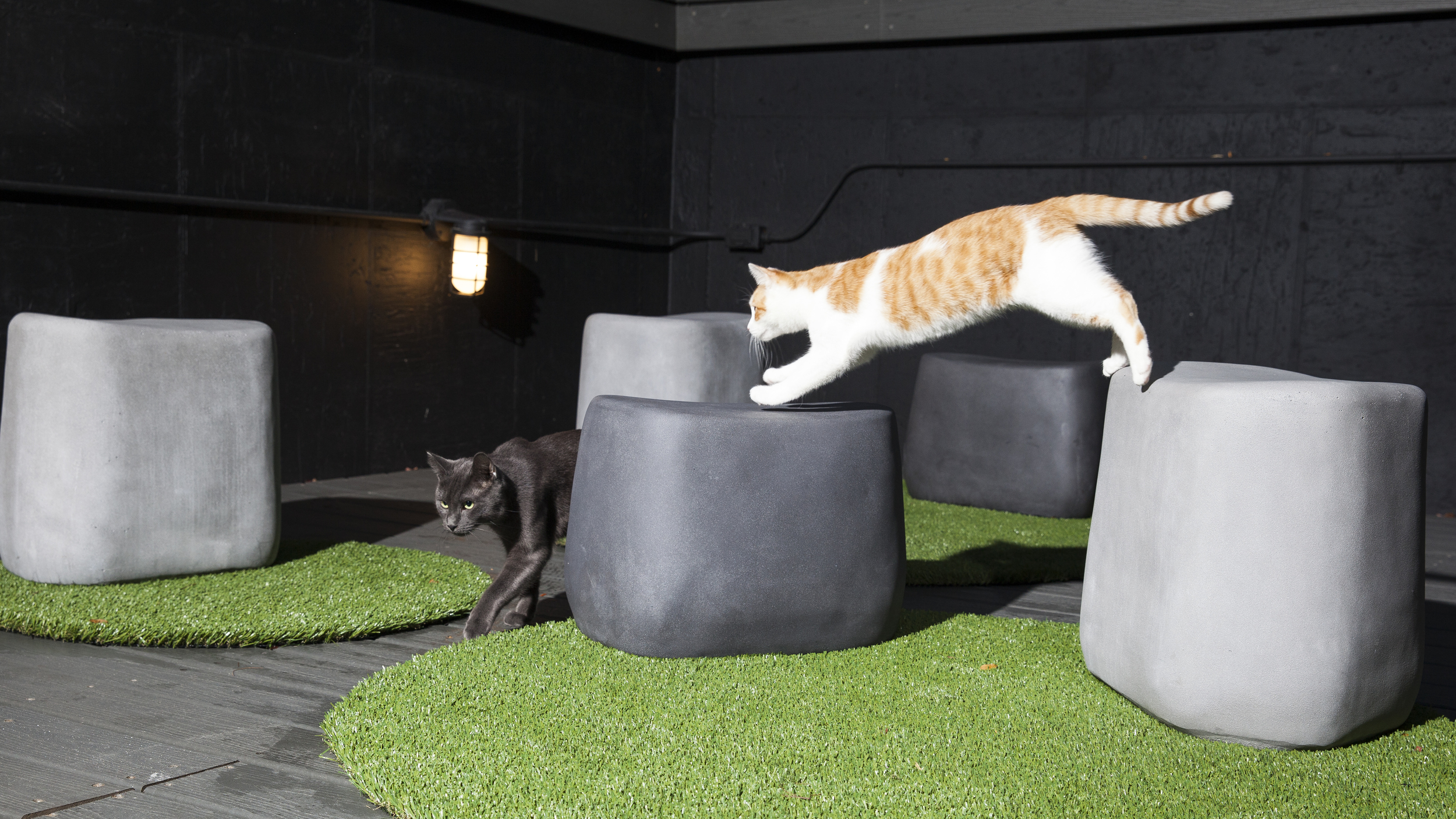 1e24775264b3 This Cafe is the Cat's Meow – Literally – Blueprint, presented by CBRE