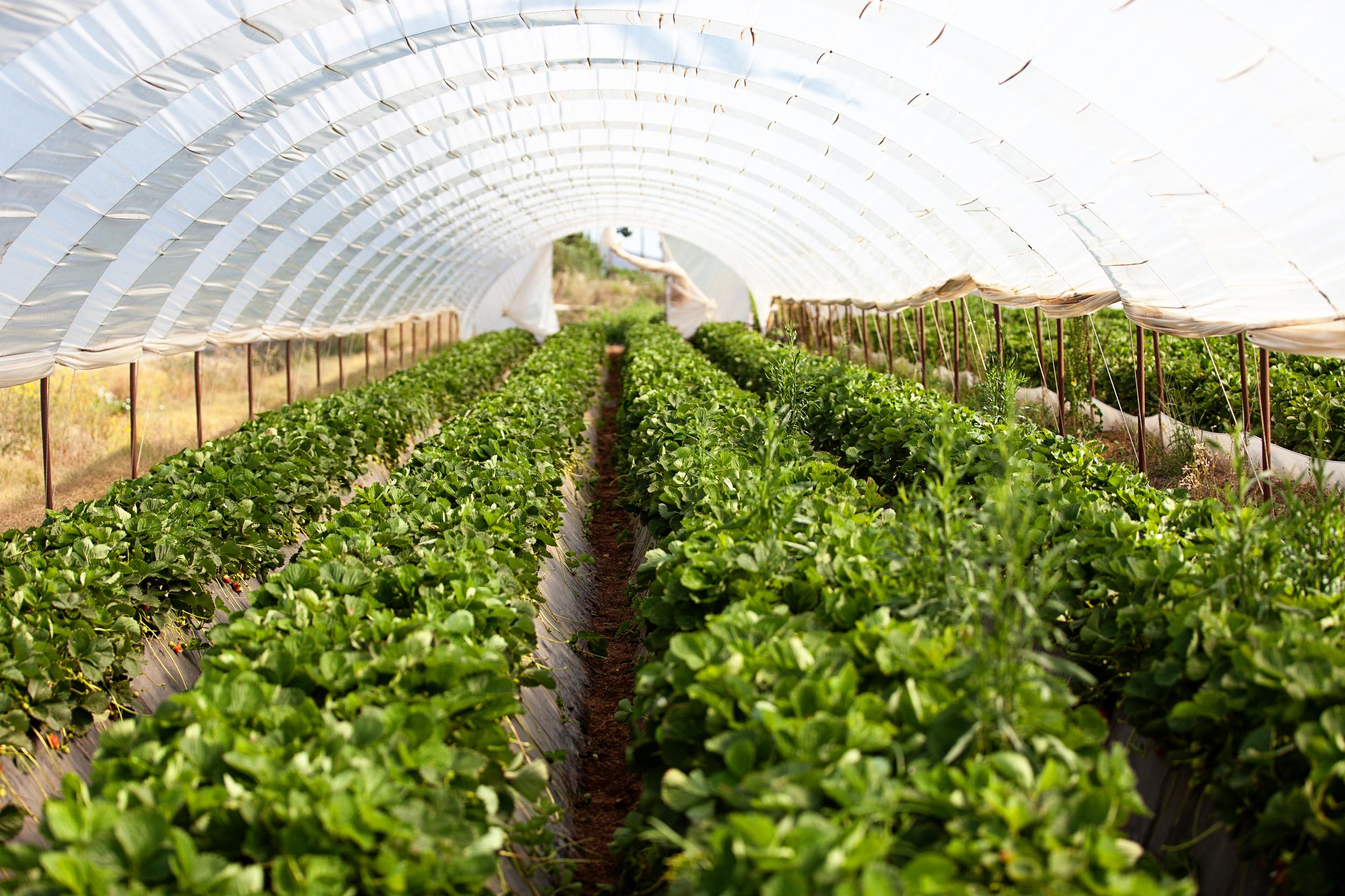 Investor interest is growing in farmland blueprint presented by cbre malvernweather Choice Image